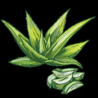 Aloe Extract sketch