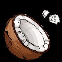 Coconut sketch