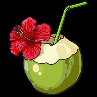 Coconut water sketch