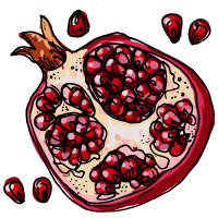 Pomergranate sketch