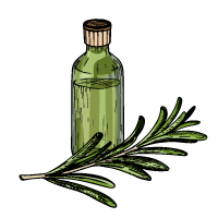 Rosemary Extract Sketch
