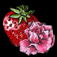 Strawberry Rose sketch