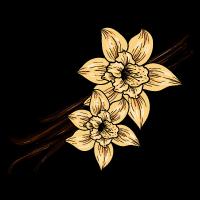 Vanilla Bean sketch