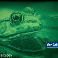 Dry Lab: Anatomy of Flowering Plants