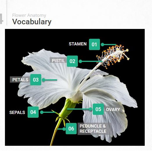 Anatomy of Flowering Plants Virtual Dry Lab