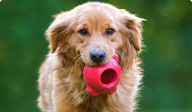 Dog with Caitec toy