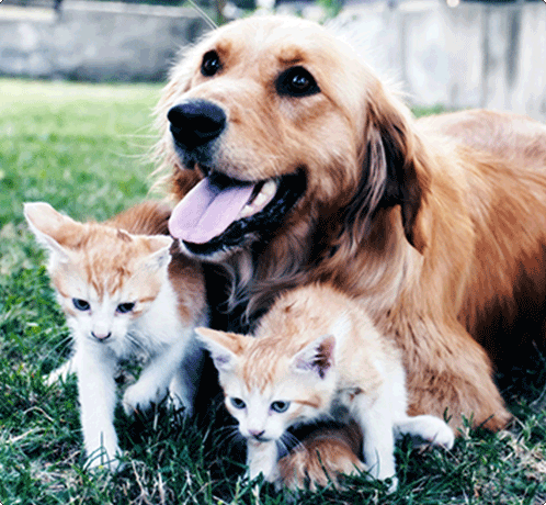 Kittens with a puppy